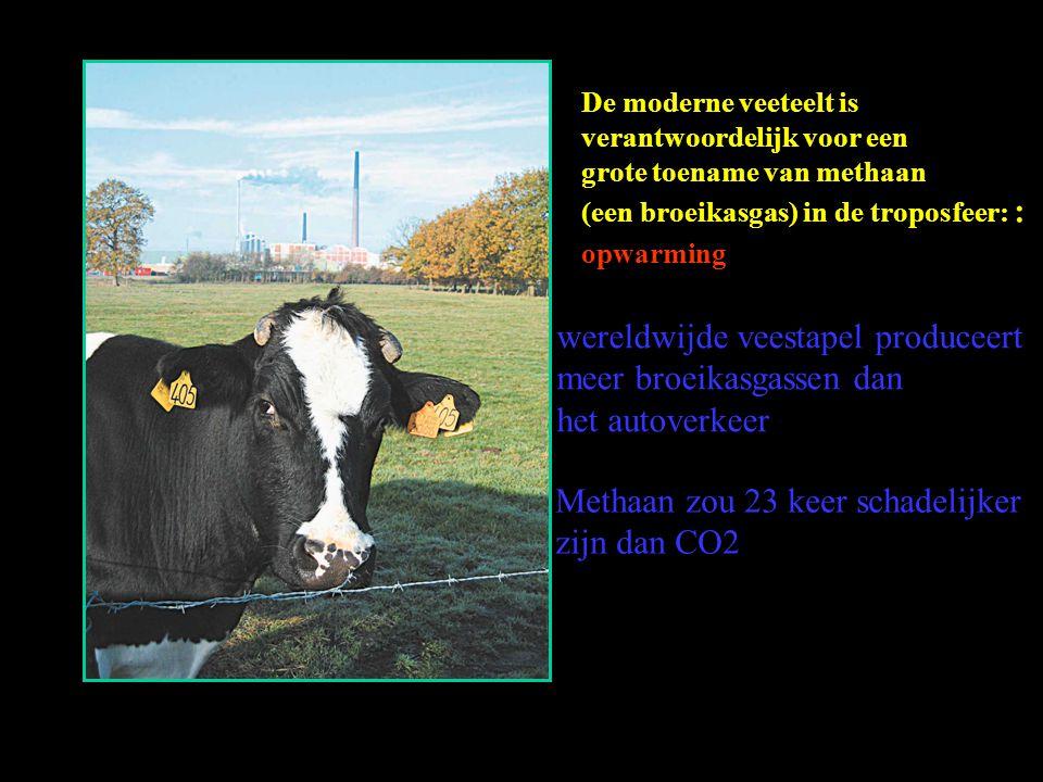De moderne veeteelt is verantwoordelijk voor een grote toename van methaan (een broeikasgas) in de troposfeer: : opwarming wereldwijde veestapel produ