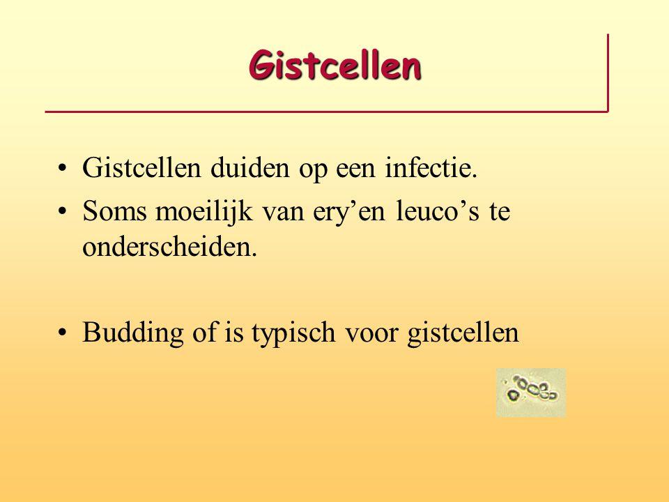 Gistcellen •Gistcellen duiden op een infectie. •Soms moeilijk van ery'en leuco's te onderscheiden. •Budding of is typisch voor gistcellen