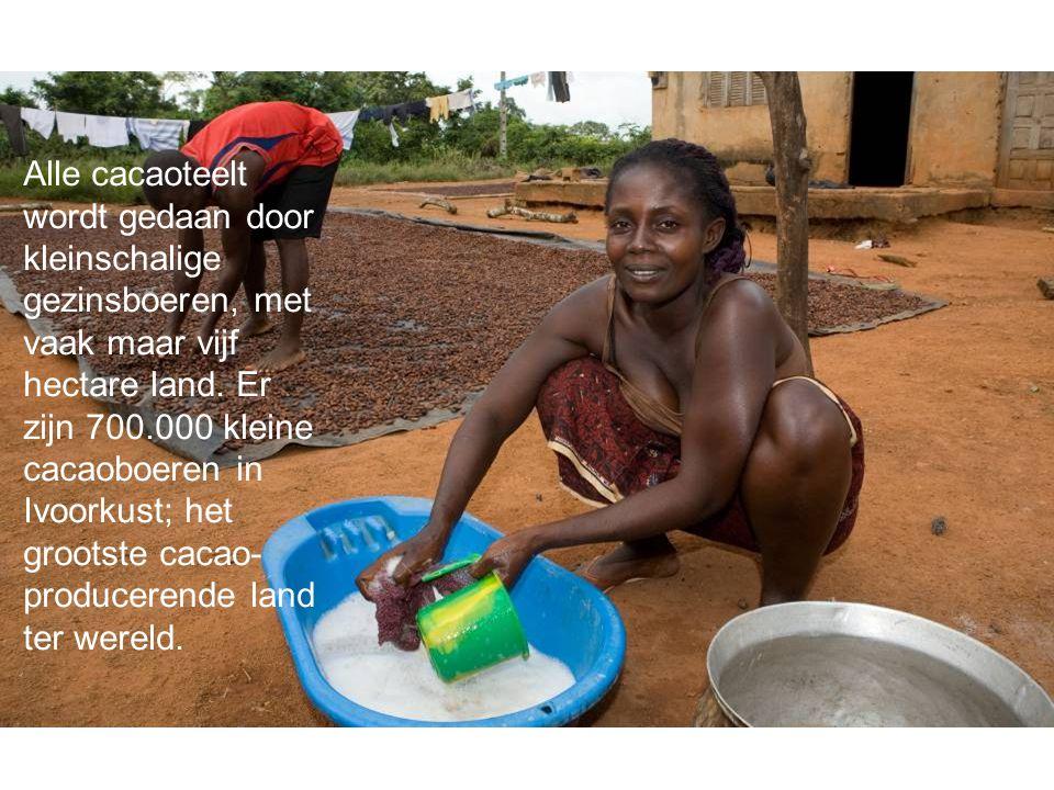 Alle cacaoteelt wordt gedaan door kleinschalige gezinsboeren, met vaak maar vijf hectare land.