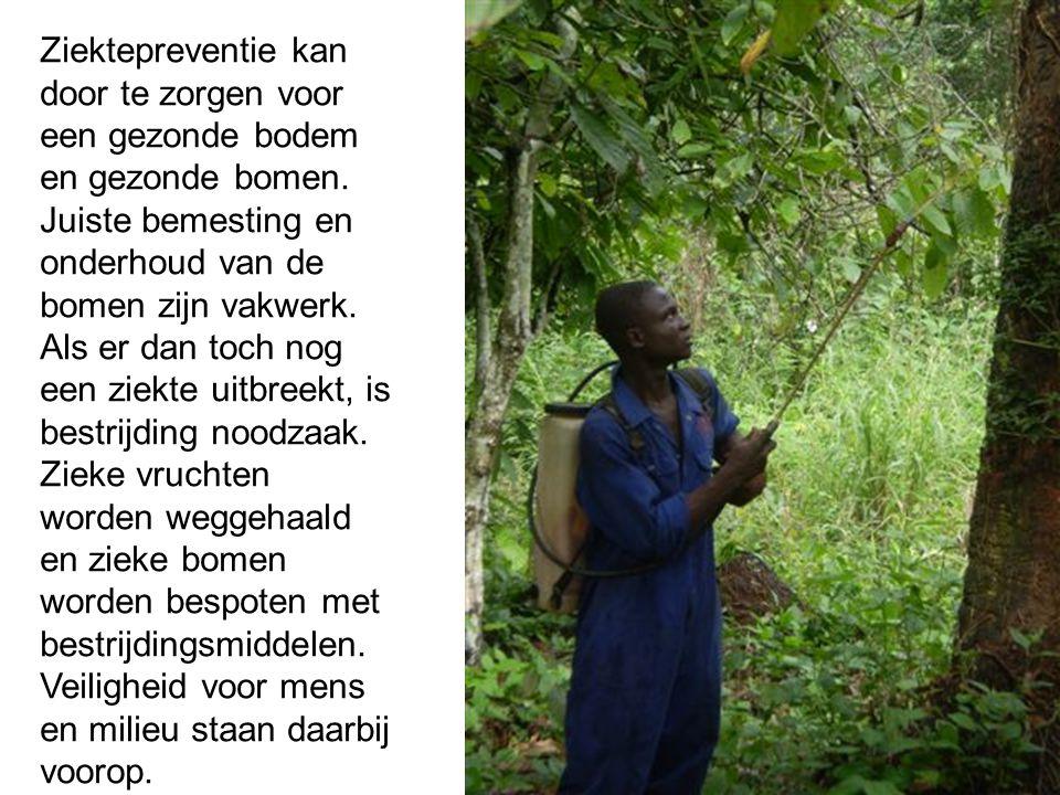 Ziektepreventie kan door te zorgen voor een gezonde bodem en gezonde bomen. Juiste bemesting en onderhoud van de bomen zijn vakwerk. Als er dan toch n