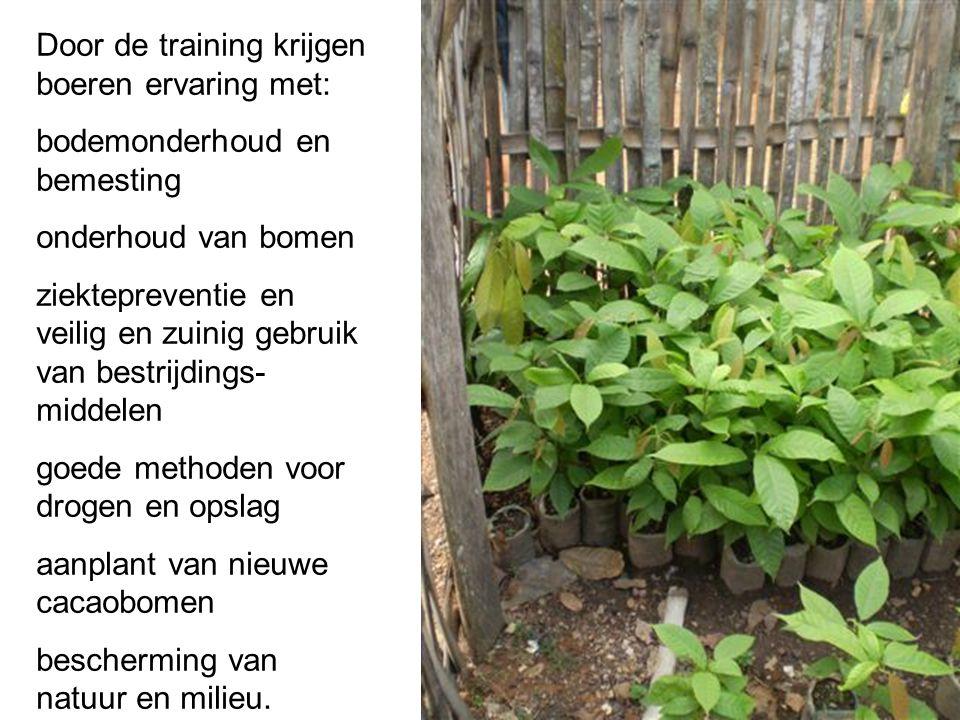 Door de training krijgen boeren ervaring met: bodemonderhoud en bemesting onderhoud van bomen ziektepreventie en veilig en zuinig gebruik van bestrijd