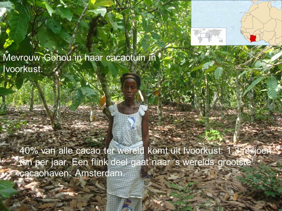 40% van alle cacao ter wereld komt uit Ivoorkust: 1,3 miljoen ton per jaar. Een flink deel gaat naar 's werelds grootste cacaohaven: Amsterdam. Mevrou
