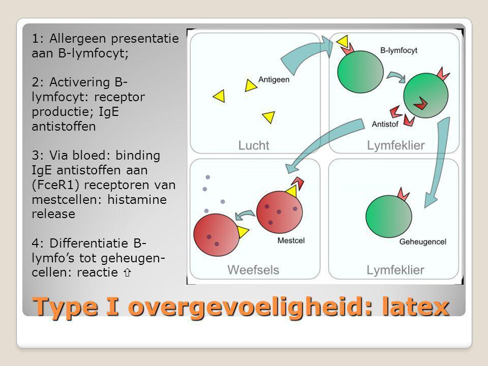 Type I overgevoeligheid: latex 1: Allergeen presentatie aan B-lymfocyt; 2: Activering B- lymfocyt: receptor productie; IgE antistoffen 3: Via bloed: b