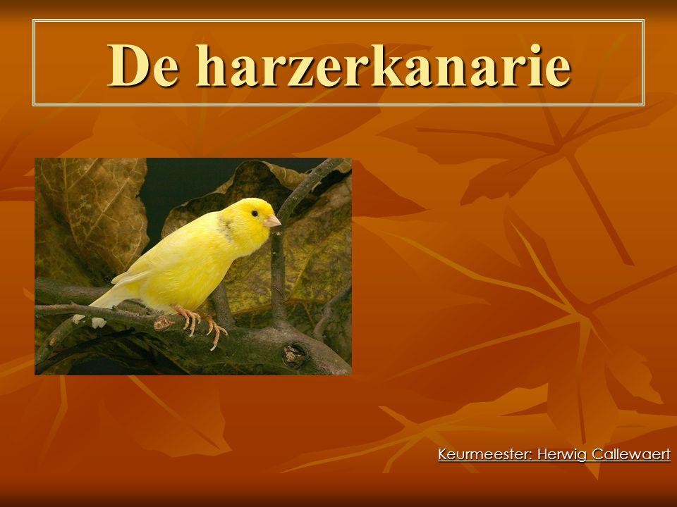 Oorsprong  De harzer vindt zijn oorsprong in het Harzgebergte.