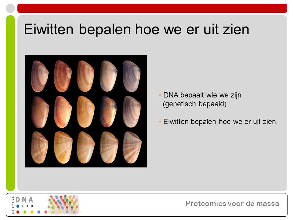 Eiwitten bepalen hoe we er uit zien • DNA bepaalt wie we zijn (genetisch bepaald) • Eiwitten bepalen hoe we er uit zien. Proteomics voor de massa