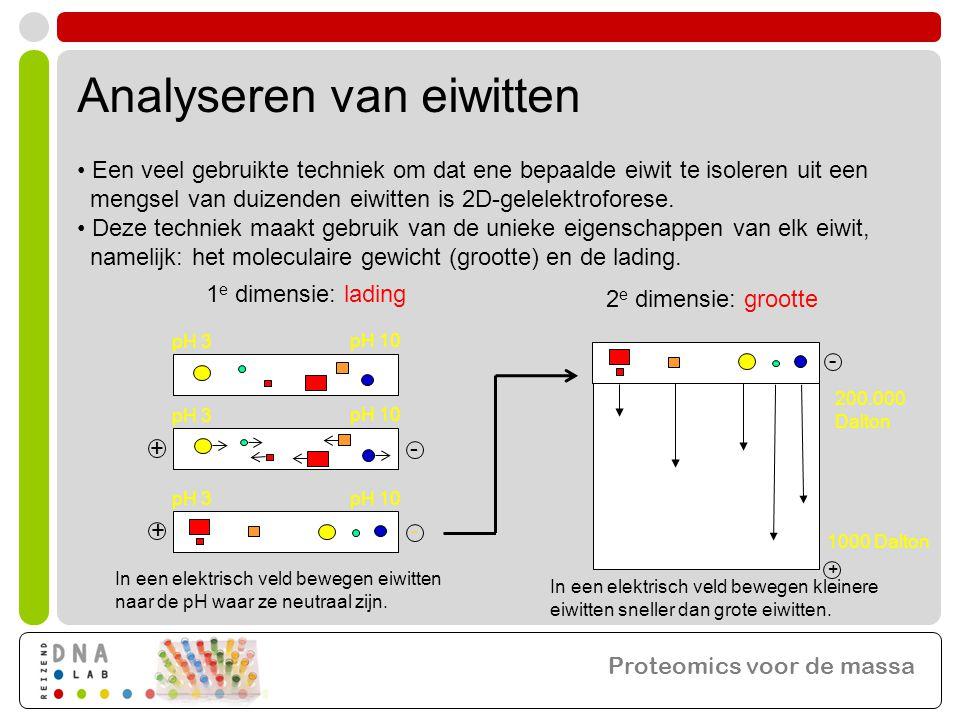 Analyseren van eiwitten • Een veel gebruikte techniek om dat ene bepaalde eiwit te isoleren uit een mengsel van duizenden eiwitten is 2D-gelelektroforese.