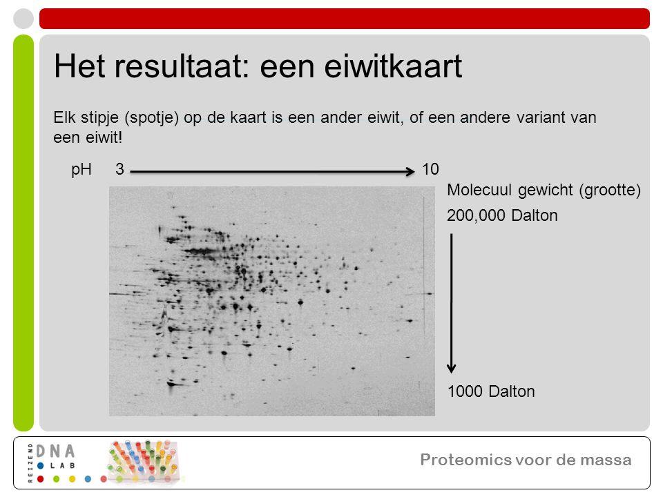 Het resultaat: een eiwitkaart pH 3 10 Molecuul gewicht (grootte) 200,000 Dalton 1000 Dalton Elk stipje (spotje) op de kaart is een ander eiwit, of een andere variant van een eiwit.