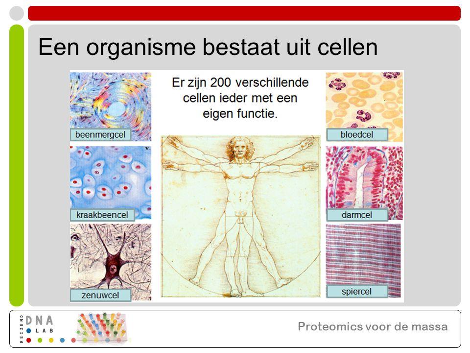 Een organisme bestaat uit cellen Proteomics voor de massa