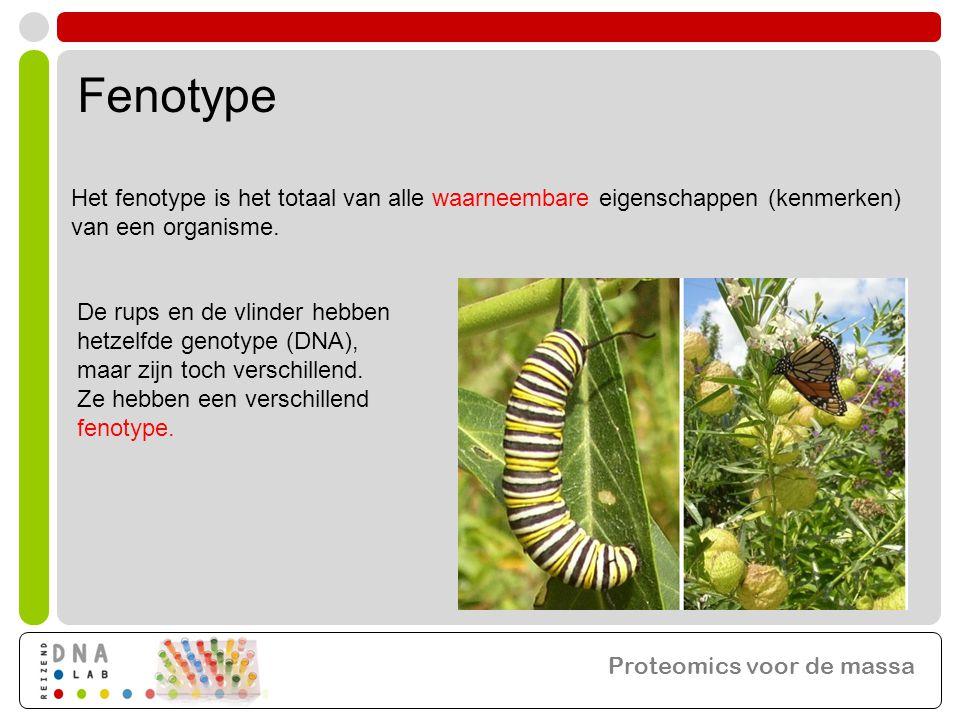 Fenotype Het fenotype is het totaal van alle waarneembare eigenschappen (kenmerken) van een organisme. De rups en de vlinder hebben hetzelfde genotype
