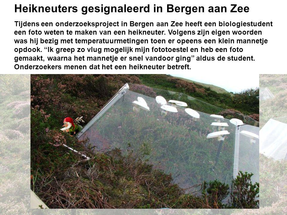 Discussie Heikneuters gesignaleerd in Bergen aan Zee Tijdens een onderzoeksproject in Bergen aan Zee heeft een biologiestudent een foto weten te maken