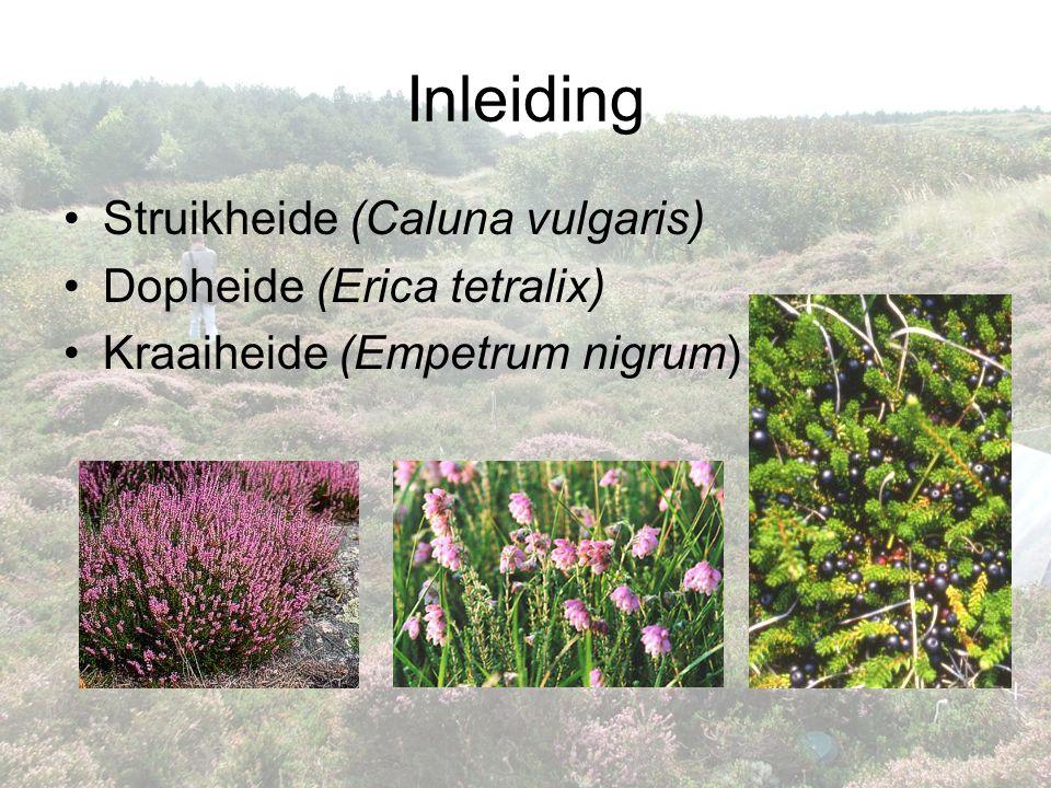 Inleiding •Struikheide (Caluna vulgaris) •Dopheide (Erica tetralix) •Kraaiheide (Empetrum nigrum)