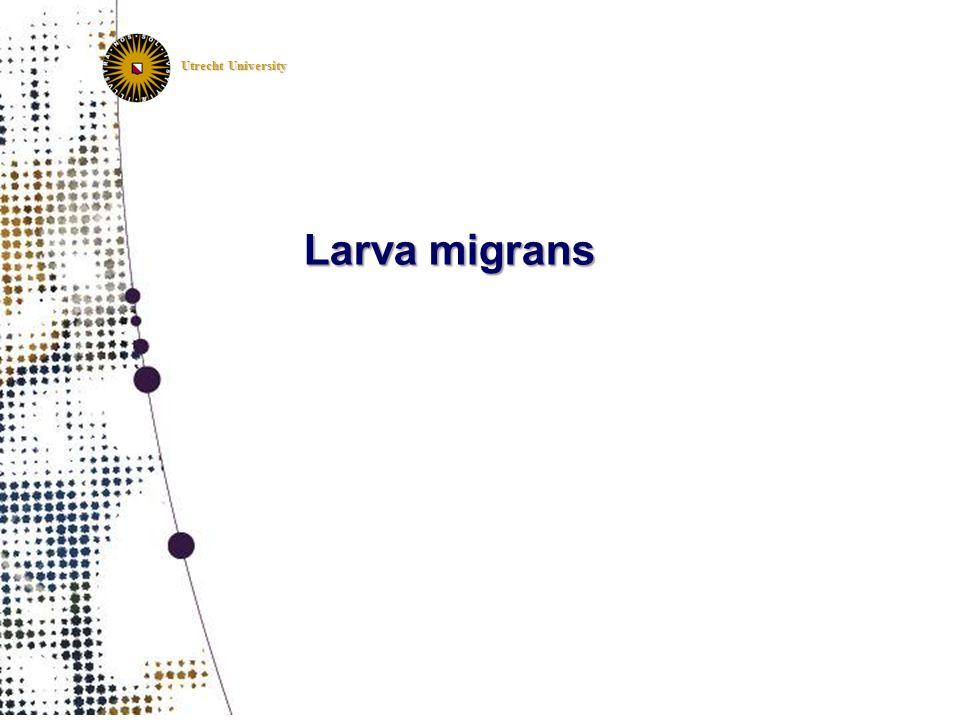 Utrecht University Larva migrans