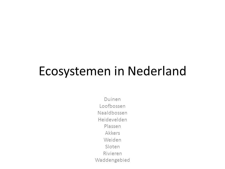 Ecosystemen in Nederland Duinen Loofbossen Naaldbossen Heidevelden Plassen Akkers Weiden Sloten Rivieren Waddengebied