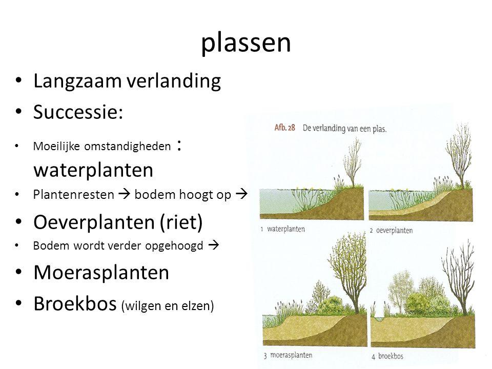 plassen • Langzaam verlanding • Successie: • Moeilijke omstandigheden : waterplanten • Plantenresten  bodem hoogt op  • Oeverplanten (riet) • Bodem