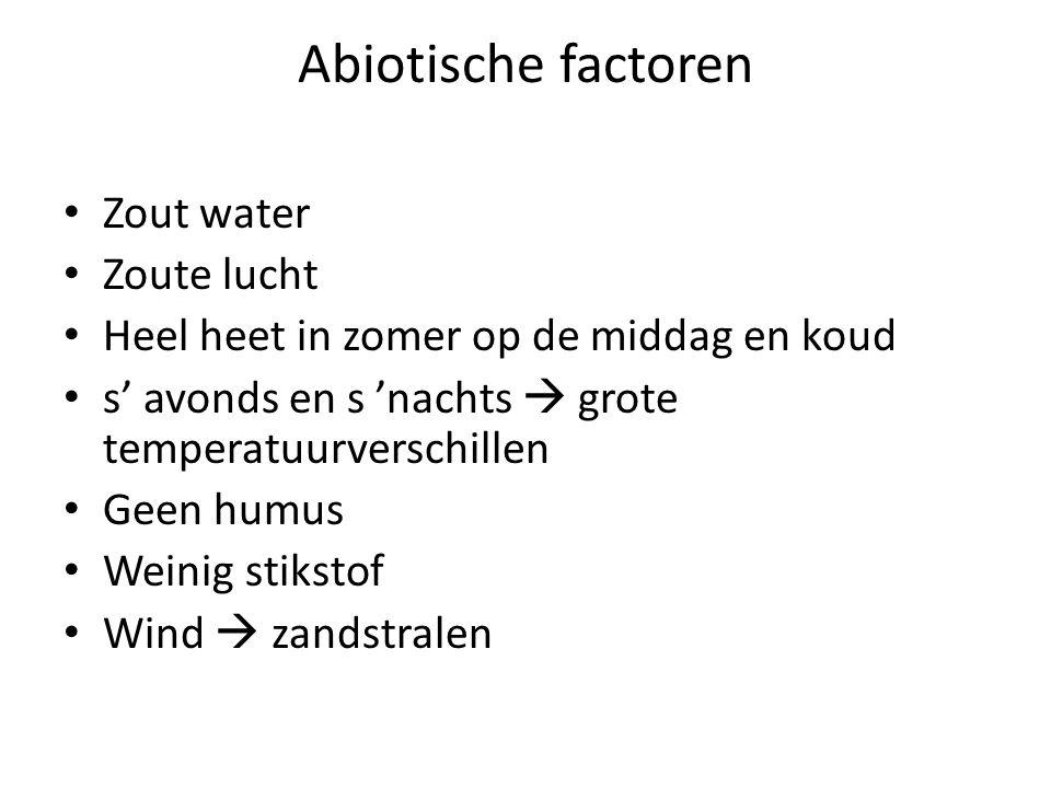 Abiotische factoren • Zout water • Zoute lucht • Heel heet in zomer op de middag en koud • s' avonds en s 'nachts  grote temperatuurverschillen • Gee