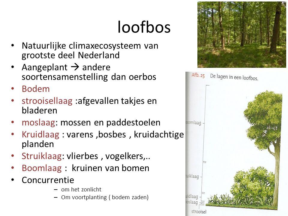 loofbos • Natuurlijke climaxecosysteem van grootste deel Nederland • Aangeplant  andere soortensamenstelling dan oerbos • Bodem • strooisellaag :afge