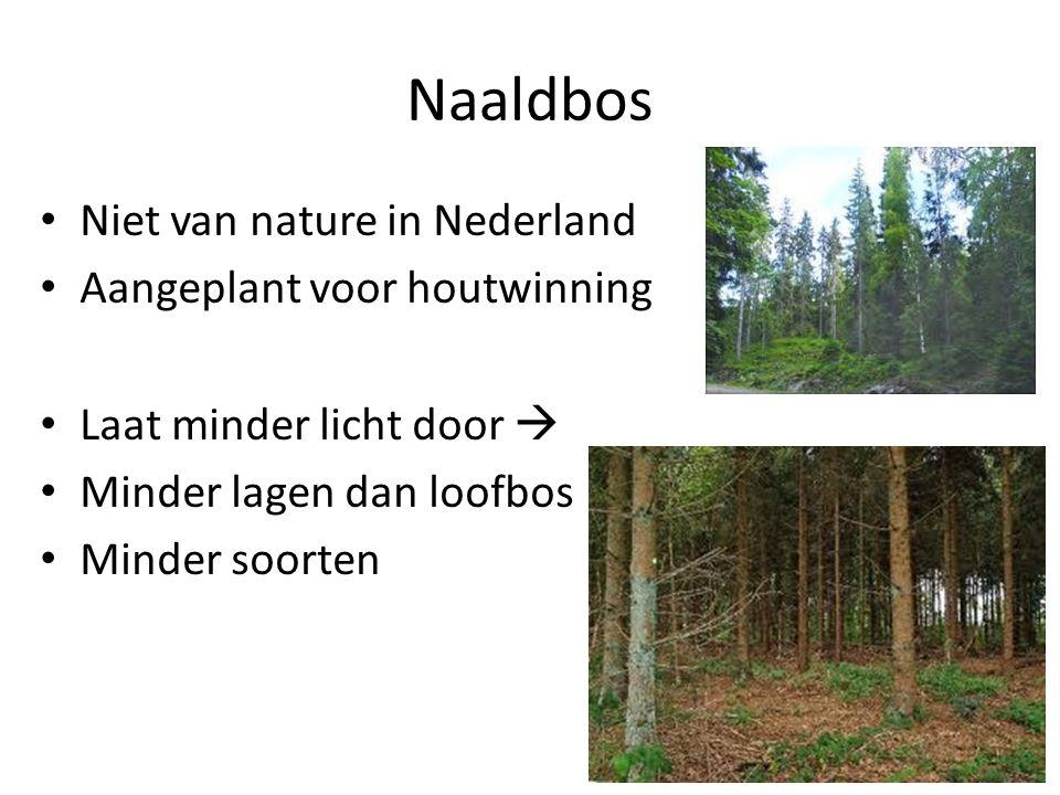 Naaldbos • Niet van nature in Nederland • Aangeplant voor houtwinning • Laat minder licht door  • Minder lagen dan loofbos • Minder soorten