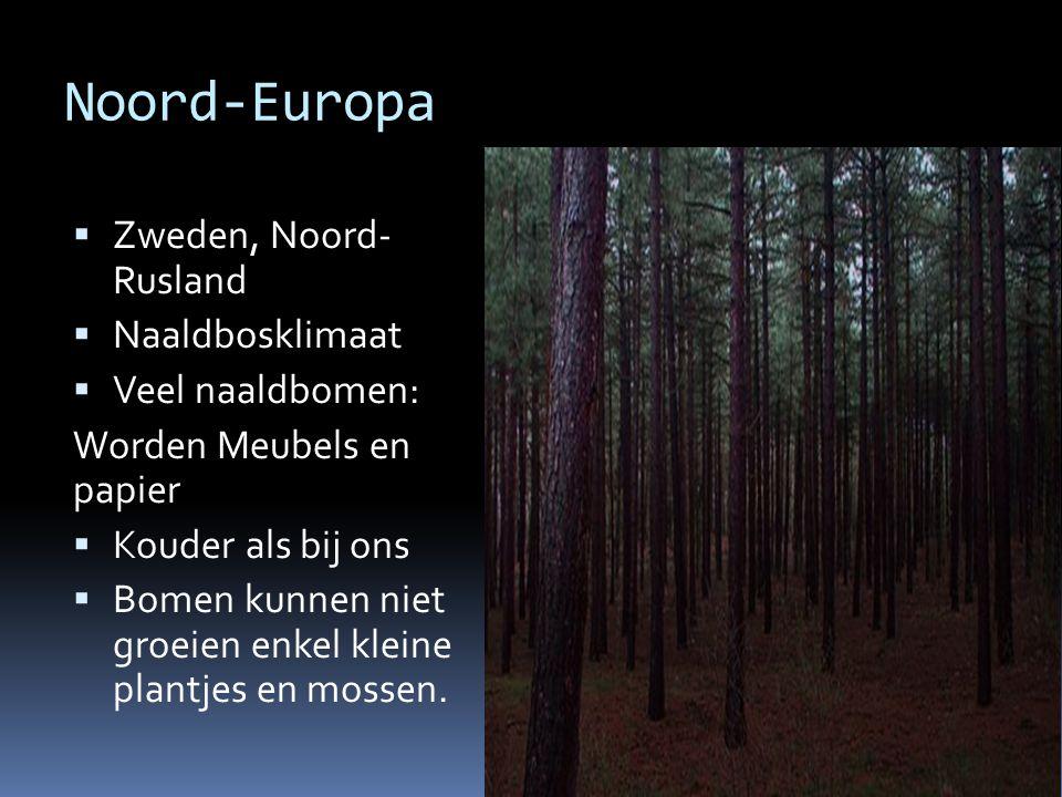 Noord-Europa  Zweden, Noord- Rusland  Naaldbosklimaat  Veel naaldbomen: Worden Meubels en papier  Kouder als bij ons  Bomen kunnen niet groeien enkel kleine plantjes en mossen.