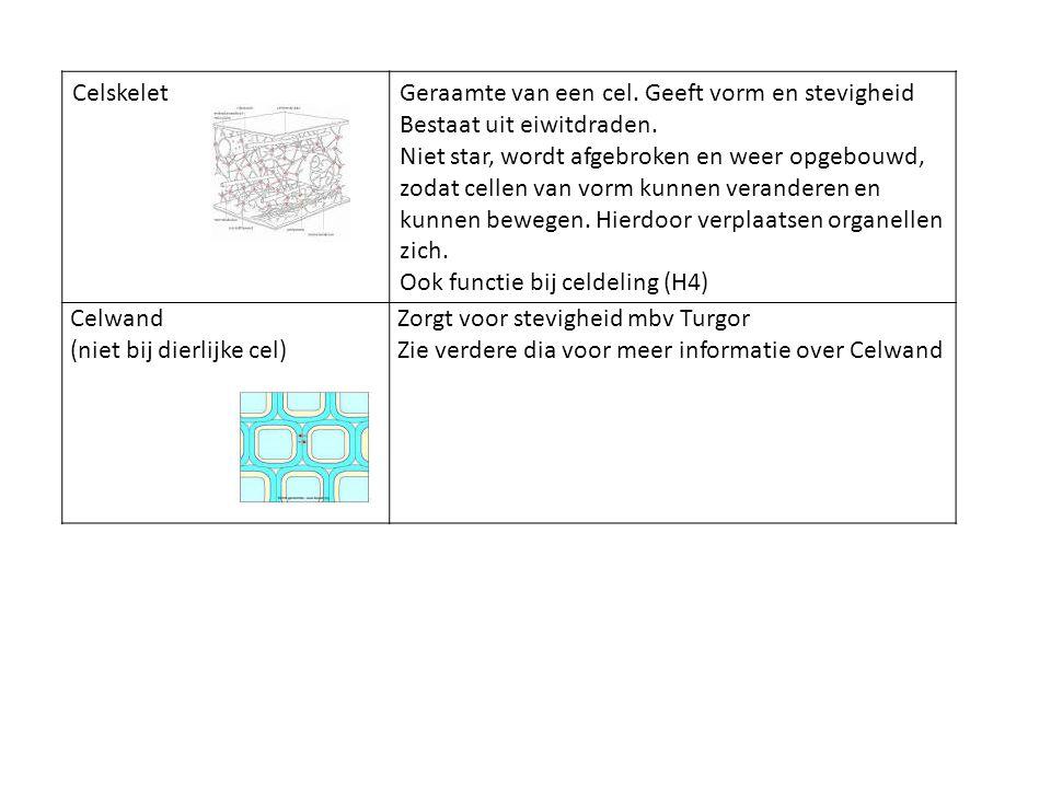 CelskeletGeraamte van een cel. Geeft vorm en stevigheid Bestaat uit eiwitdraden. Niet star, wordt afgebroken en weer opgebouwd, zodat cellen van vorm