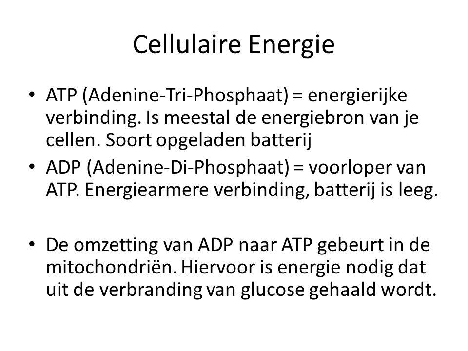 Cellulaire Energie • ATP (Adenine-Tri-Phosphaat) = energierijke verbinding. Is meestal de energiebron van je cellen. Soort opgeladen batterij • ADP (A