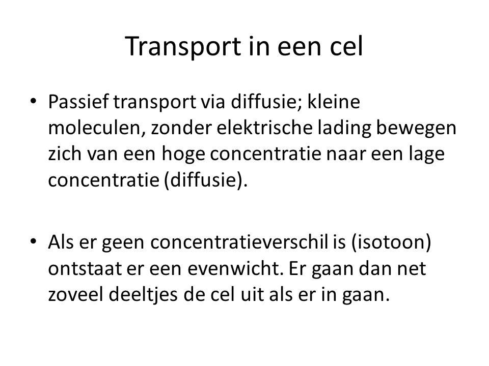 Transport in een cel • Passief transport via diffusie; kleine moleculen, zonder elektrische lading bewegen zich van een hoge concentratie naar een lag