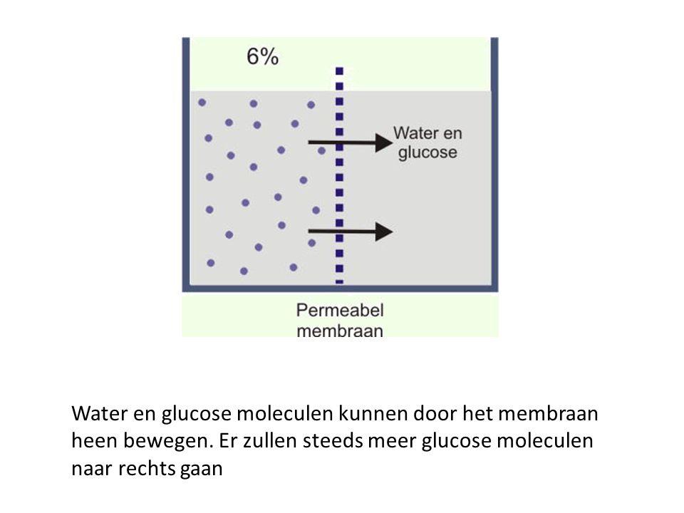 Water en glucose moleculen kunnen door het membraan heen bewegen. Er zullen steeds meer glucose moleculen naar rechts gaan