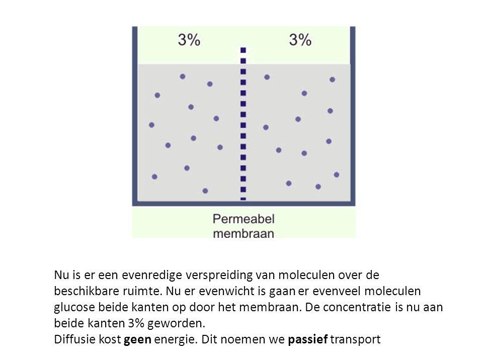 Nu is er een evenredige verspreiding van moleculen over de beschikbare ruimte. Nu er evenwicht is gaan er evenveel moleculen glucose beide kanten op d