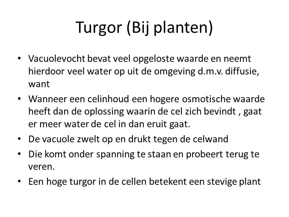 Turgor (Bij planten) • Vacuolevocht bevat veel opgeloste waarde en neemt hierdoor veel water op uit de omgeving d.m.v. diffusie, want • Wanneer een ce