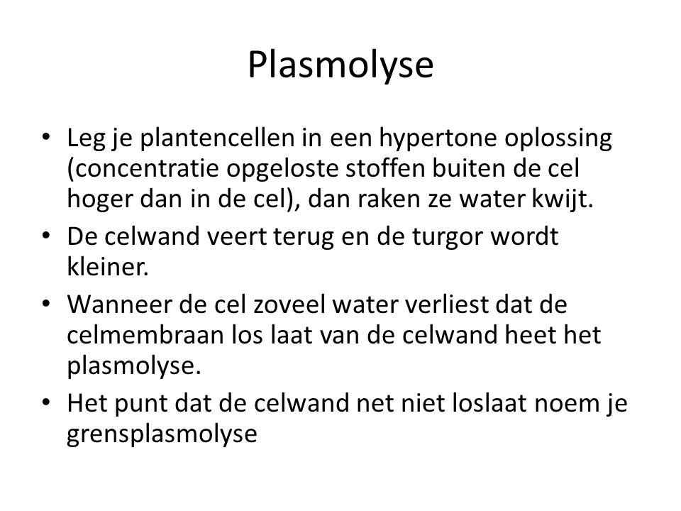 Plasmolyse • Leg je plantencellen in een hypertone oplossing (concentratie opgeloste stoffen buiten de cel hoger dan in de cel), dan raken ze water kw