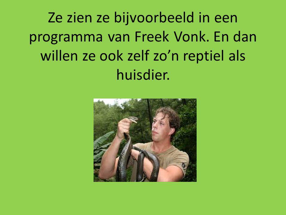 Ze zien ze bijvoorbeeld in een programma van Freek Vonk. En dan willen ze ook zelf zo'n reptiel als huisdier.