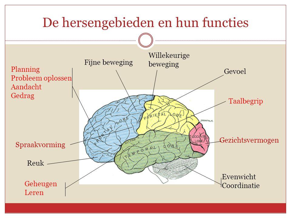 De hersengebieden en hun functies Planning Probleem oplossen Aandacht Gedrag Spraakvorming Reuk Geheugen Leren Fijne beweging Willekeurige beweging Ge
