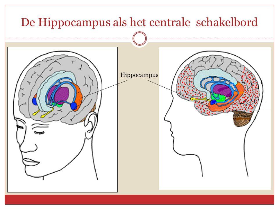 De Hippocampus als het centrale schakelbord Hippocampus