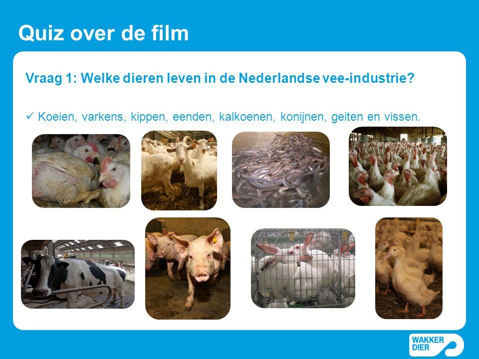 Vraag 1: Welke dieren leven in de Nederlandse vee-industrie? Quiz over de film  Koeien, varkens, kippen, eenden, kalkoenen, konijnen, geiten en visse