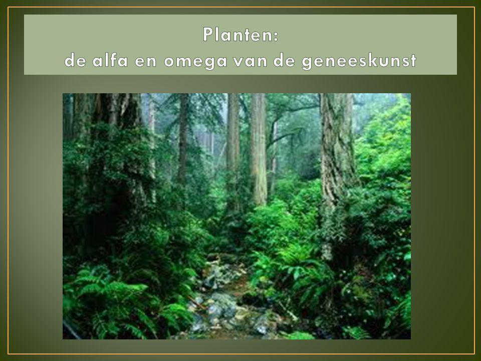 Als we door de bomen het bos niet meer zien zijn we in het Plantenrijk