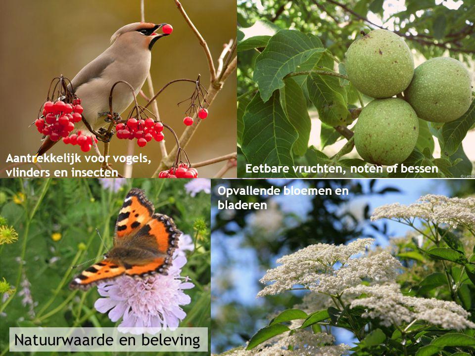 Natuurwaarde en beleving Aantrekkelijk voor vogels, vlinders en insecten Opvallende bloemen en bladeren Eetbare vruchten, noten of bessen