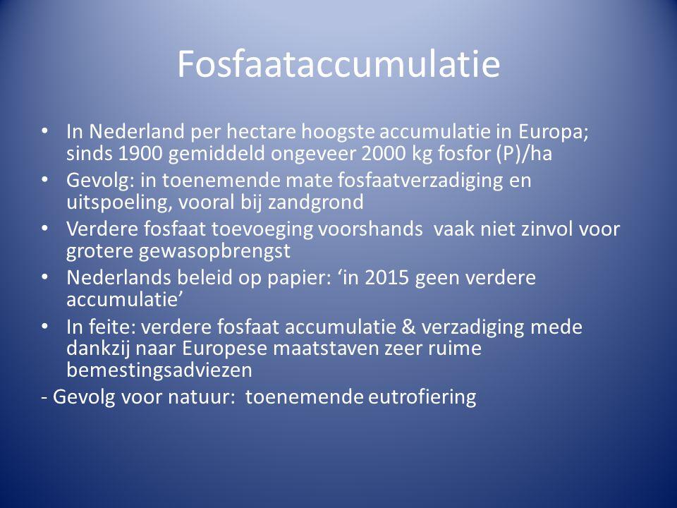 Fosfaataccumulatie • In Nederland per hectare hoogste accumulatie in Europa; sinds 1900 gemiddeld ongeveer 2000 kg fosfor (P)/ha • Gevolg: in toenemende mate fosfaatverzadiging en uitspoeling, vooral bij zandgrond • Verdere fosfaat toevoeging voorshands vaak niet zinvol voor grotere gewasopbrengst • Nederlands beleid op papier: 'in 2015 geen verdere accumulatie' • In feite: verdere fosfaat accumulatie & verzadiging mede dankzij naar Europese maatstaven zeer ruime bemestingsadviezen - Gevolg voor natuur: toenemende eutrofiering