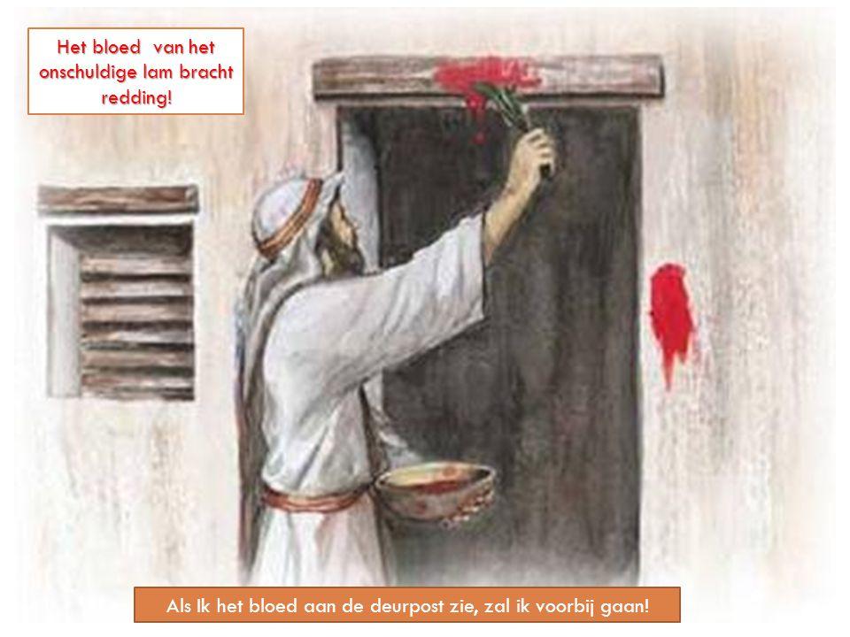 Als Ik het bloed aan de deurpost zie, zal ik voorbij gaan! Het bloed van het onschuldige lam bracht redding!
