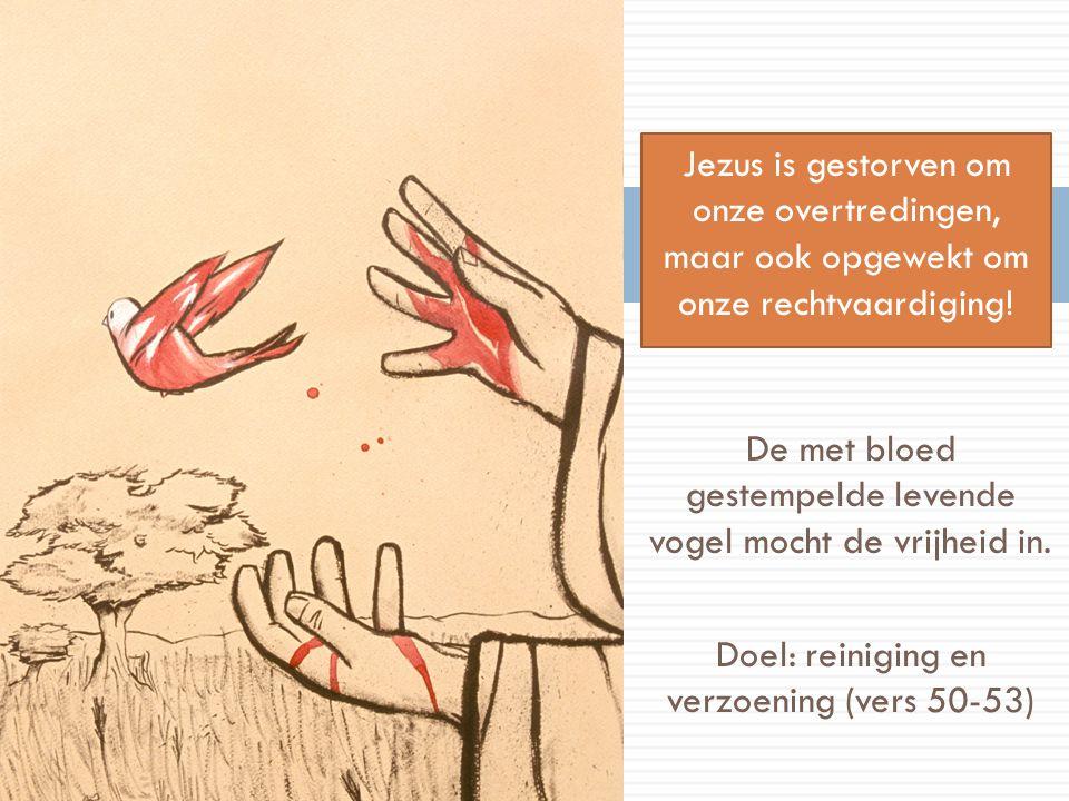 De met bloed gestempelde levende vogel mocht de vrijheid in. Doel: reiniging en verzoening (vers 50-53) Jezus is gestorven om onze overtredingen, maar