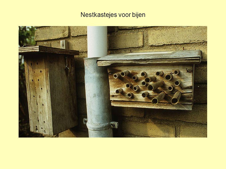 Nestkastejes voor bijen