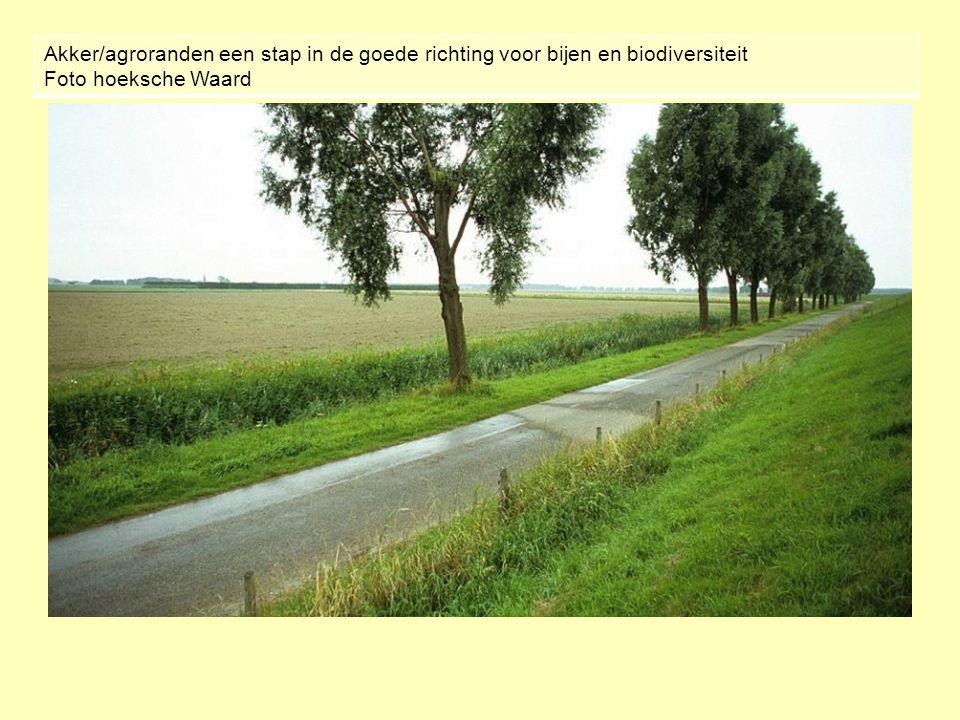Akker/agroranden een stap in de goede richting voor bijen en biodiversiteit Foto hoeksche Waard