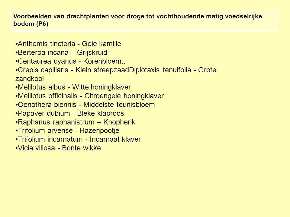 Voorbeelden van drachtplanten voor droge tot vochthoudende matig voedselrijke bodem (P6) •Anthemis tinctoria - Gele kamille •Berteroa incana – Grijskruid •Centaurea cyanus - Korenbloem:.