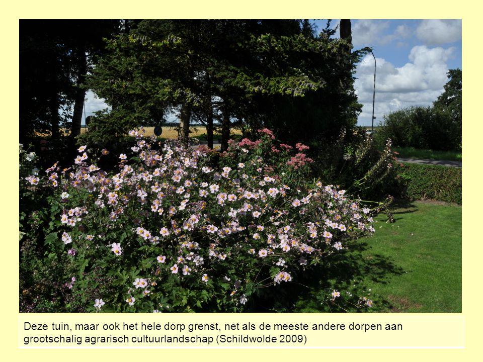 Deze tuin, maar ook het hele dorp grenst, net als de meeste andere dorpen aan grootschalig agrarisch cultuurlandschap (Schildwolde 2009)