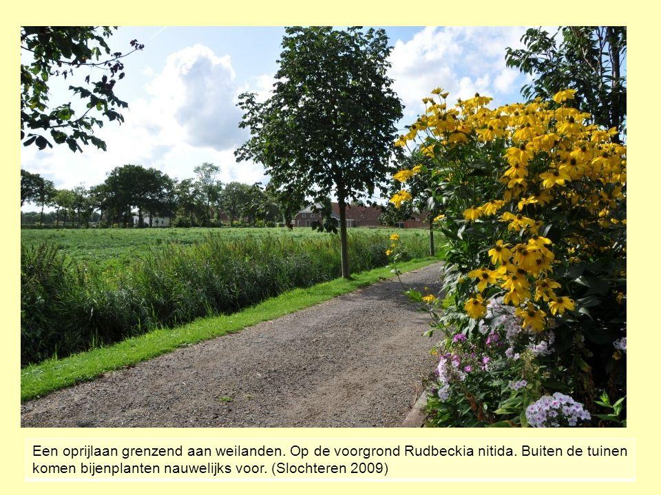 Een oprijlaan grenzend aan weilanden.Op de voorgrond Rudbeckia nitida.