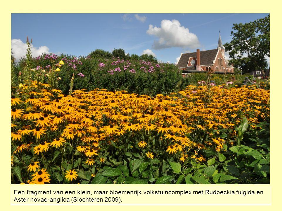 Een fragment van een klein, maar bloemenrijk volkstuincomplex met Rudbeckia fulgida en Aster novae-anglica (Slochteren 2009).
