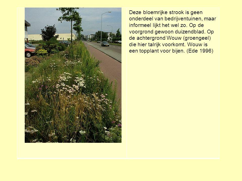 Deze bloemrijke strook is geen onderdeel van bedrijventuinen, maar informeel lijkt het wel zo.
