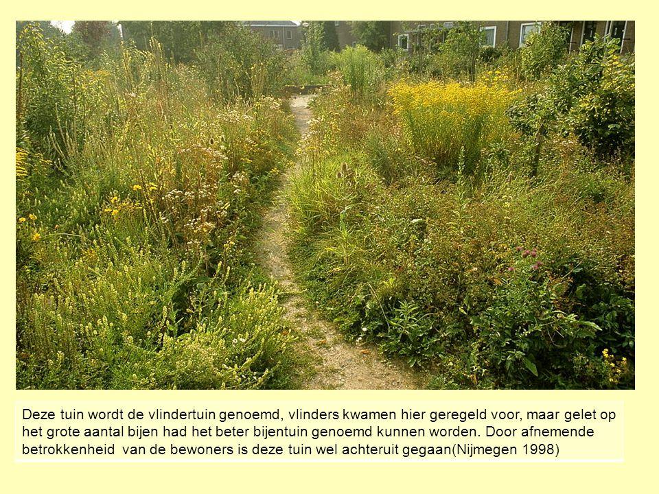 Deze tuin wordt de vlindertuin genoemd, vlinders kwamen hier geregeld voor, maar gelet op het grote aantal bijen had het beter bijentuin genoemd kunne