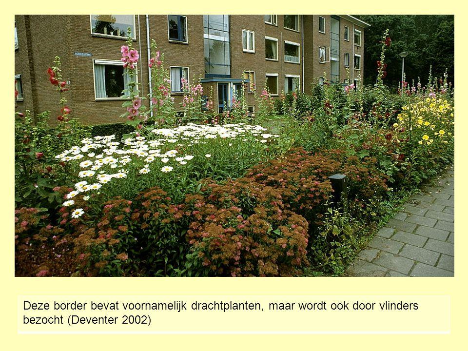 Deze border bevat voornamelijk drachtplanten, maar wordt ook door vlinders bezocht (Deventer 2002)