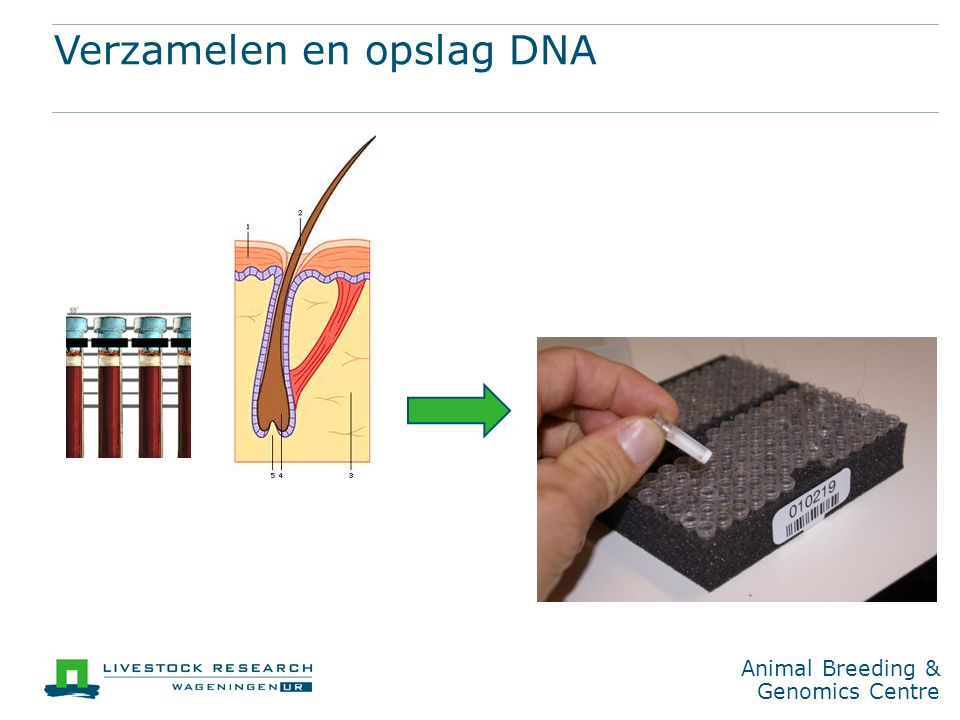 Animal Breeding & Genomics Centre Verzamelen en opslag DNA