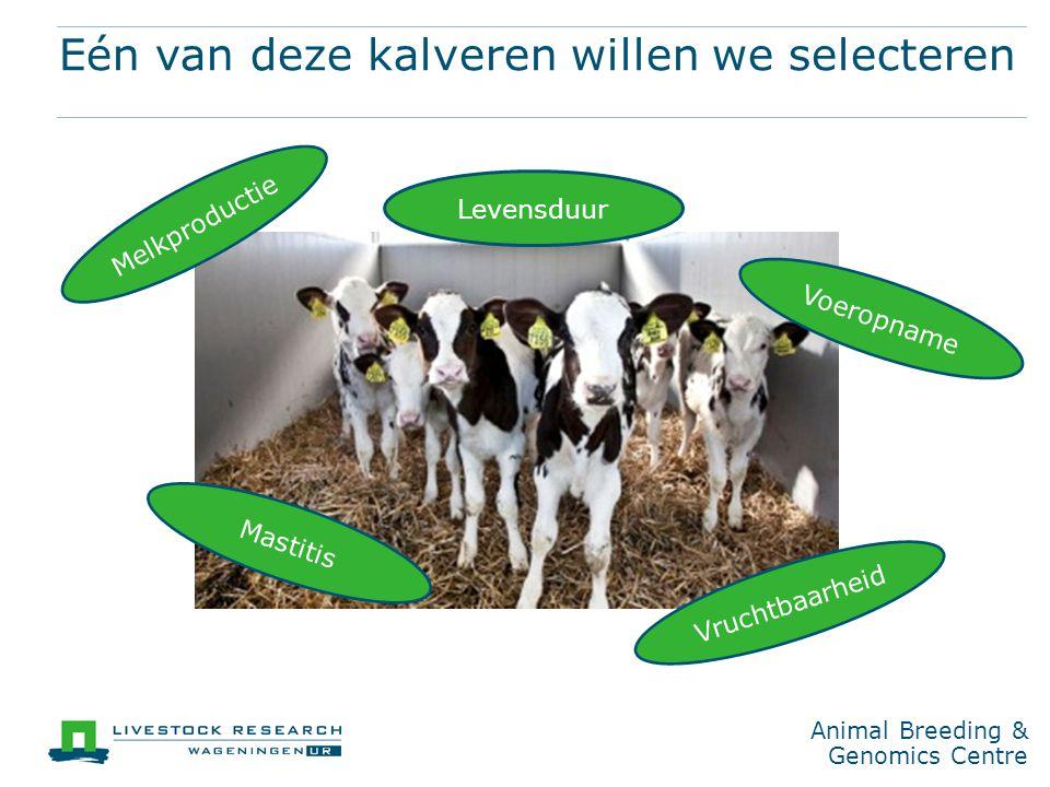 Animal Breeding & Genomics Centre Eén van deze kalveren willen we selecteren Melkproductie Vruchtbaarheid Voeropname Mastitis Levensduur