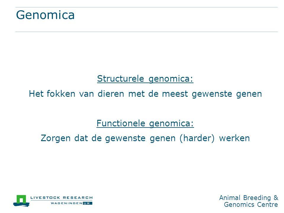 Structurele genomica: Het fokken van dieren met de meest gewenste genen Functionele genomica: Zorgen dat de gewenste genen (harder) werken Animal Breeding & Genomics Centre Genomica